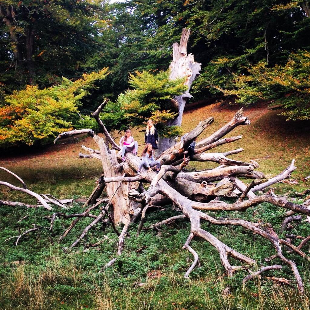 Forest fairies in Dyrehaven