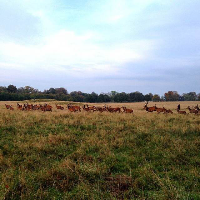 One of my favourite places, Dyrehaven, a deer park north of Copenhagen