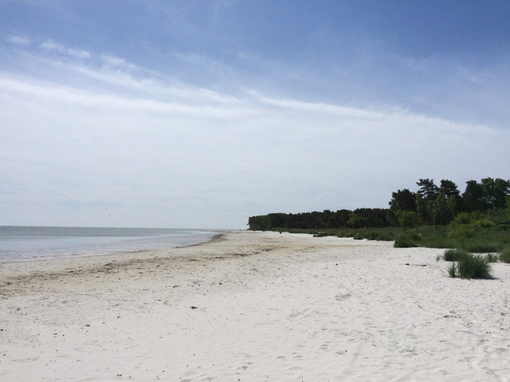 This white sand beach of Snogebæk catches my breath every single time.