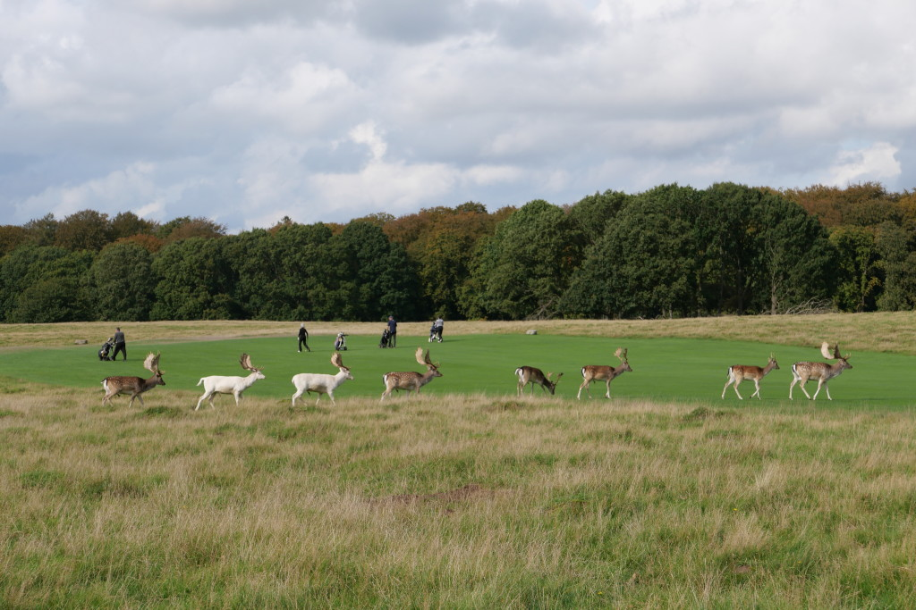 Suddenly an entire flock of deer appeared with a few white deer, which I have never ever seen before.