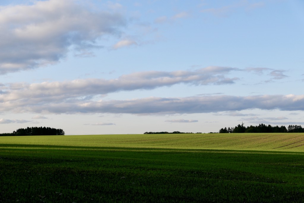It is not a Windows desktop background, just a typical countryside scene from a Danish countryside