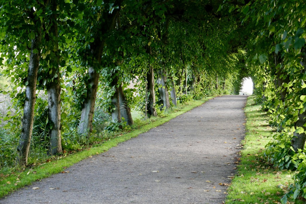 This path is made up of dreams  <3