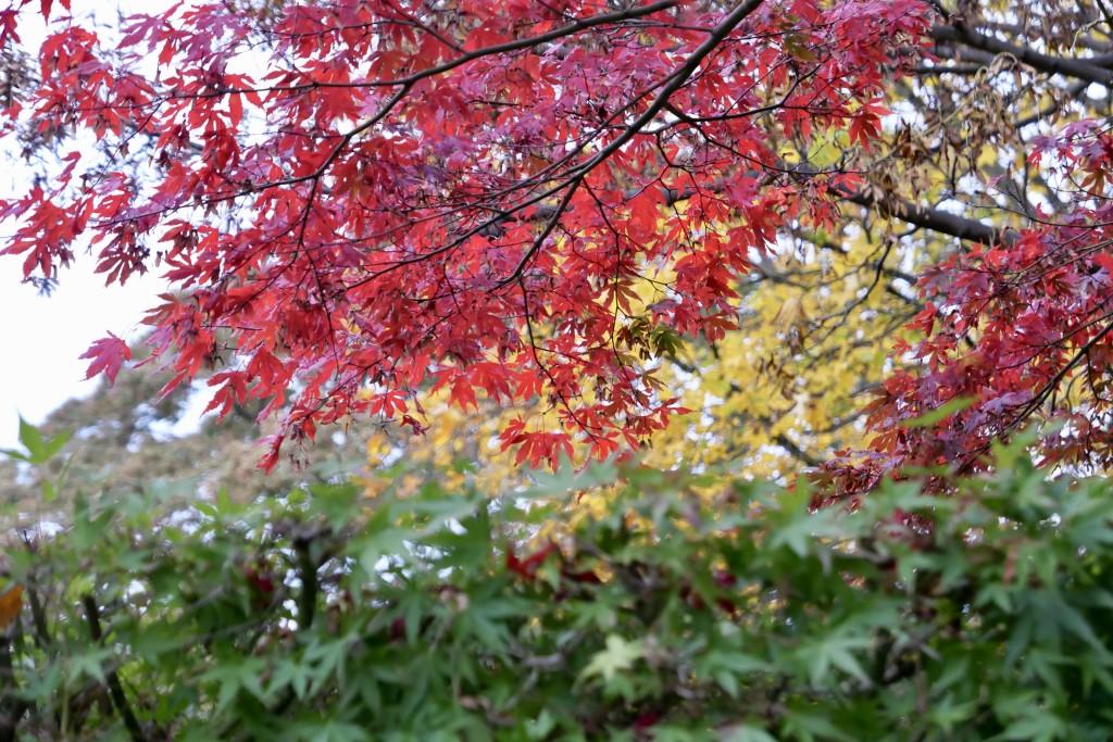 Splash of autumn magic